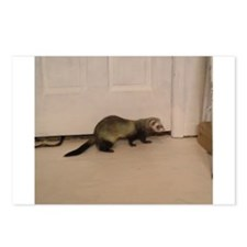 Cute Ferret owner Postcards (Package of 8)