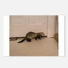 Cute Ferret owner Postcards (Package of 8)