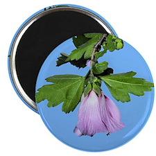 Rose of Sharon on Blue Magnet