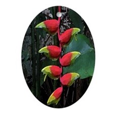 Heliconia Oval Ornament