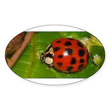 Ladybug on Leaf Decal