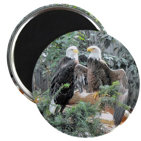 Bald Eagles in the Sun Magnet
