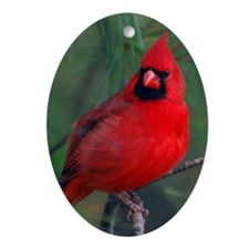 Male Cardinal Ornament (oval)
