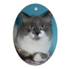 Good Mews Ornament (Oval)