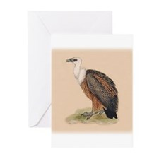 Griffon Vulture Greeting Cards (Pk of 10)