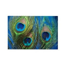 Blue Peacock Feather Rectangle Magnet
