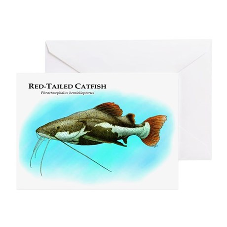 Red-Tailed Catfish Greeting Cards (Pk of 10)