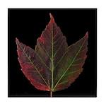 Fall Maple Leaf Tile Coaster