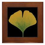 Fall Ginkgo Leaf Framed Tile