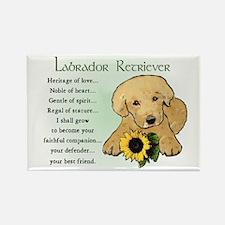 Labrador Retriever Rectangle Magnet (10 pack)