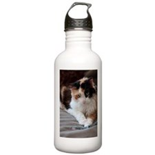 Calico Kitty Sports Water Bottle