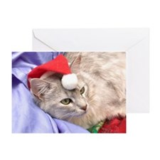 silver somali cat christmas Card