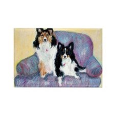 Two Shelties Rectangle Magnet (10 pack)