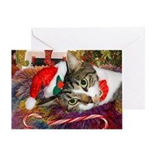 Candy Cane Cat Greeting Card
