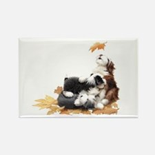 Cute Bearded collie Rectangle Magnet (10 pack)