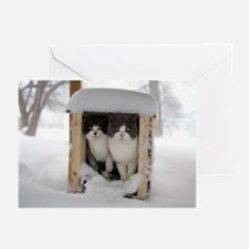Snow Kittens #2 Greeting Cards (Pk of 20)