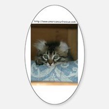 American Curl Oval Decal