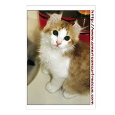 American Curl Postcards (Package of 8)