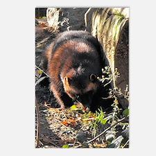 Wolverine Browsing Postcards (Package of 8)