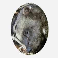 Sleeping Wolverine Ornament (Oval)