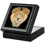 African Lion Keepsake Box