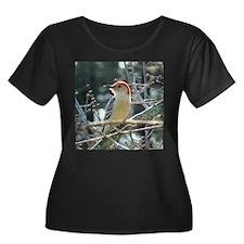 Red-bellied Woodpecker T