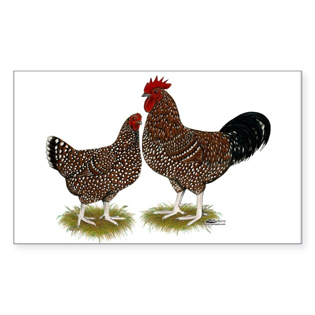 Speckled Sussex Chickens Sticker (Rectangle) By Jackynet
