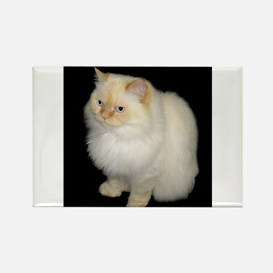 Zeus the White Himalayan Cat Rectangle Magnet