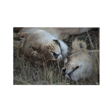 lioness and cub 1 Magnets