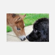 Nose to Nose Rectangle Magnet