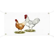 Golden Sex-link Chickens Banner