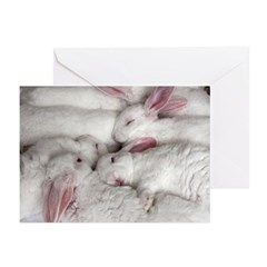 Baby Bunnies Holiday Greeting Cards (Pk of 20)