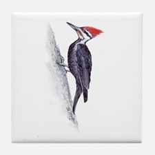 handsome pileated woodpecker Tile Coaster