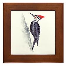 handsome pileated woodpecker Framed Tile