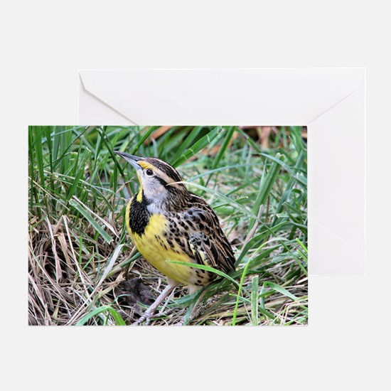 Meadowlark Greeting Card