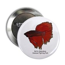 Red Betta Splendens -Siamese Button