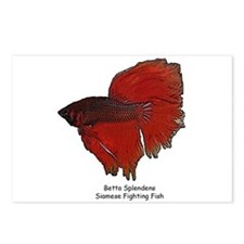 Red Betta Splendens -Siamese  Postcards (Package o