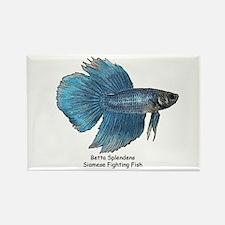 Blue Betta Splendens -Siamese Rectangle Magnet