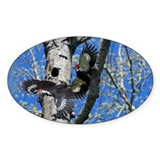 Pileated Woodpecker Family Decal