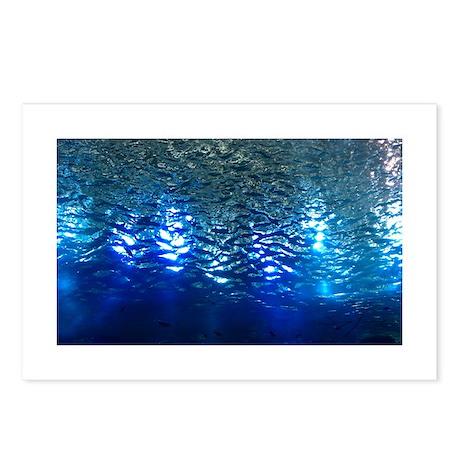 Underwater World Postcards (Package of 8)