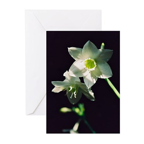Amazon Lily - Greeting Cards (Pk of 10)
