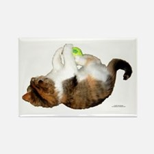 Cute Cat photos Rectangle Magnet