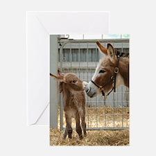 Greeting Card - Newborn Donkey Foal