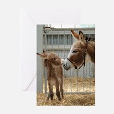 Greeting Cards (Pk of 10) - Newborn Donkey Foal
