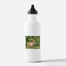 Cheetahs Water Bottle