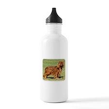 Cavalier King Charles Spaniel 9Y156D-130 Water Bottle