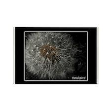 Unique Dandelion flower seed Rectangle Magnet