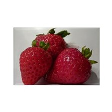 Strawberry Trio Rectangle Magnet (10 pack)