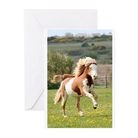Icelandic Horse Greeting Cards (Pk of 10)