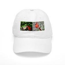 Cardinal Baseball Cap